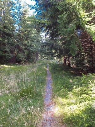 Route to forestry road