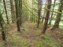 Avoiding wind blown trees