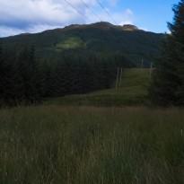 Forest break at Pylons
